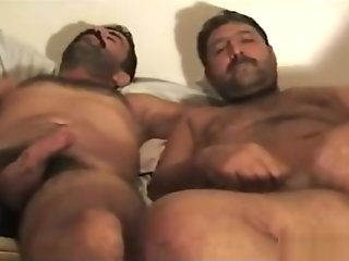 horny, hairy, turkish, bears, ,